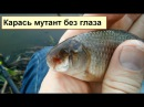 Открытие сезона рыбалки 8 марта 2016 рыба мутант (неопубликовано ранее)