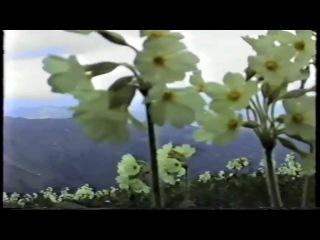 Gedebey.Ecazkar Tebiyyet.Азербайджанская флора