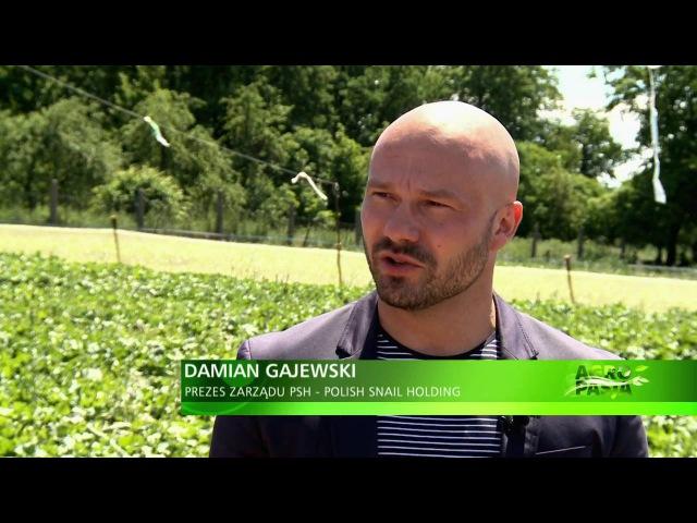 Polish Snail Holding: AGROPASJA - Hodowla ślimaków