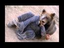 Жесть!!! Нападение диких животных на людей!!! 18 +