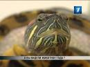 Животное 2013 года в Латвии европейская болотная черепаха