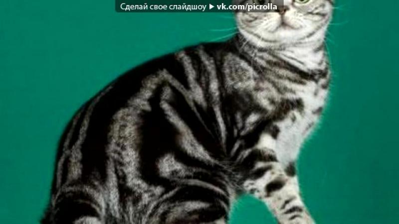 Породы кошек под музыку KATE CLAPP Мое Вдохновение КОШКИ Все Танцуют с Котами Picrolla