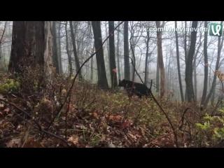 Медвежья атака
