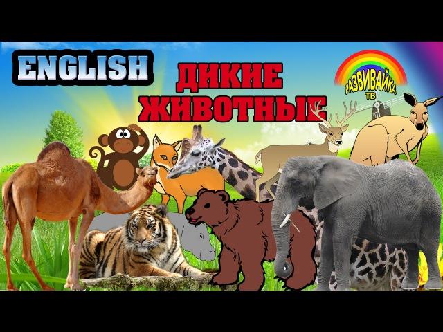 Английский язык для детей. Дикие животные. English for children. Wild animals. Развивающие мультики.