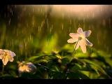 Группа Аракс Шумят дожди