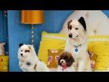 Собака точка ком Сезон 3 Серия 18