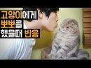 고양이에게 뽀뽀를 했을때 반응은? Kissing a Cat 猫にキスをしたときの反応 [SURI NOEL]