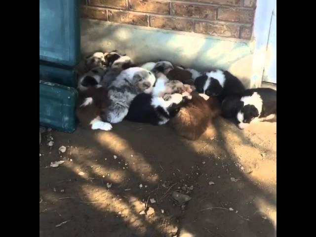 Wake up Puppies!