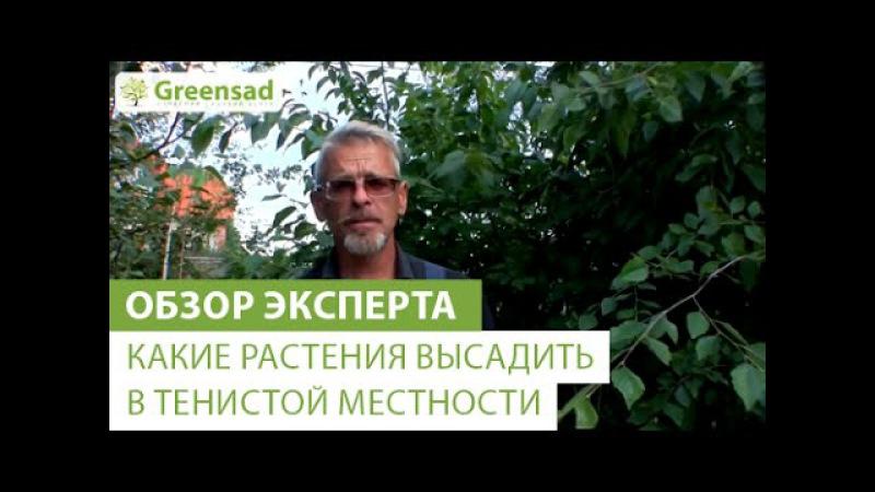 Какие растения высадить в тенистой местности