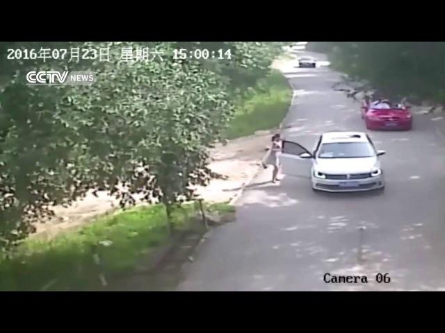 Тигр напал на человека в Пекинском зоопарке Бадалин