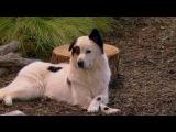 Собака точка ком Сезон 2 Серия 11