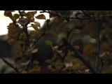 Yael Naim - Puppet (acoustic)
