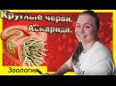 Круглые черви Аскарида Урок биологии №69