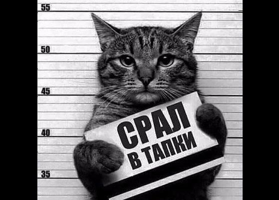 """""""Каждые две недели у боевиков ротация. Чеченцы, потому что все время """"Аллах акбар"""" кричат"""", - украинские бойцы возле оккупированного Донецка - Цензор.НЕТ 6807"""
