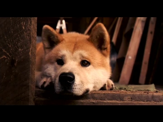 Хатико: Самый верный друг (2008) Трейлер