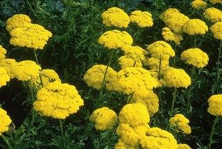 Продажа цветов киров в контакте татьяна