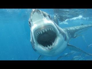 ТОП 10 - Самые опасные пляжи мира. Пляжи с высокой вероятностью нападения акул