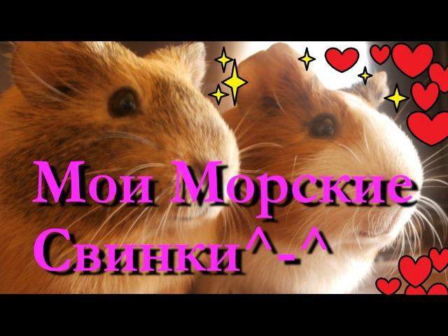 ^-^Мои Морские Свинки Белла и Фрося*-* » Freewka.com - Смотреть онлайн в хорощем качестве