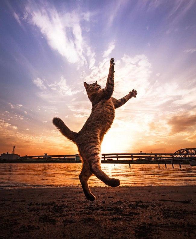 oAFMmLMvesY - 10 фото, которые доказывают, что кошки умеют летать
