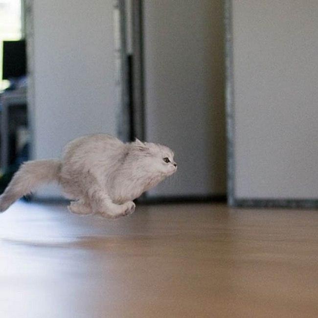 7EGGEFRQUbA - 10 фото, которые доказывают, что кошки умеют летать
