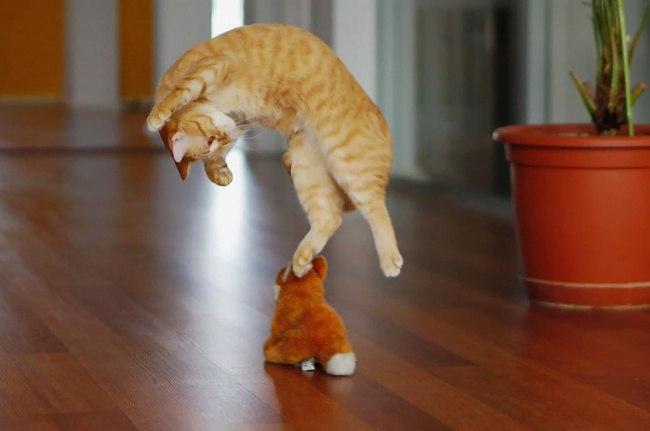 bZ1tABnNcxQ - 10 фото, которые доказывают, что кошки умеют летать