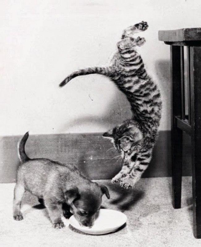 bCTHBF5JGVc - 10 фото, которые доказывают, что кошки умеют летать
