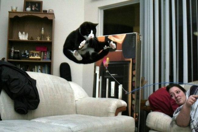J9jVrFOtK8w - 10 фото, которые доказывают, что кошки умеют летать