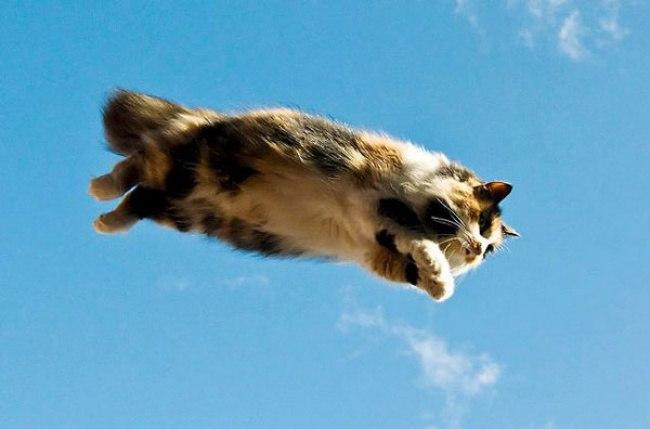 Q eItResHsg - 10 фото, которые доказывают, что кошки умеют летать