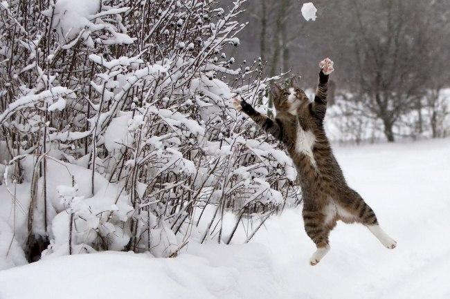 awXYPBHGpwQ - 10 фото, которые доказывают, что кошки умеют летать