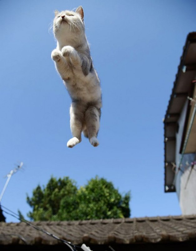 Bpm HoSx91Q - 10 фото, которые доказывают, что кошки умеют летать