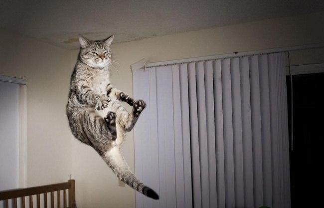5ptoM3yHnXE - 10 фото, которые доказывают, что кошки умеют летать