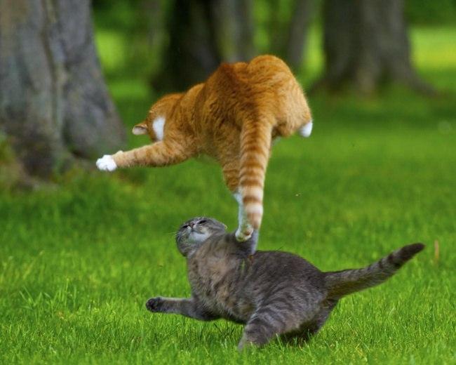Hq7ZiXrYt8M - 10 фото, которые доказывают, что кошки умеют летать
