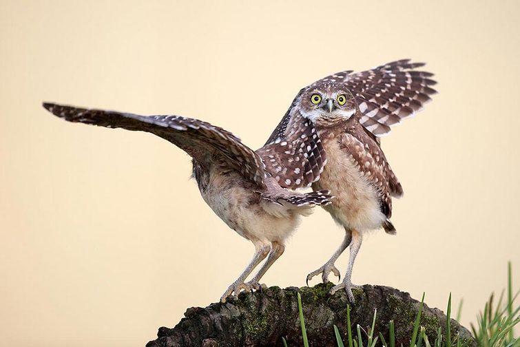 krz945Awv7U - Смешные животные Wildlife Photography Awards 2015