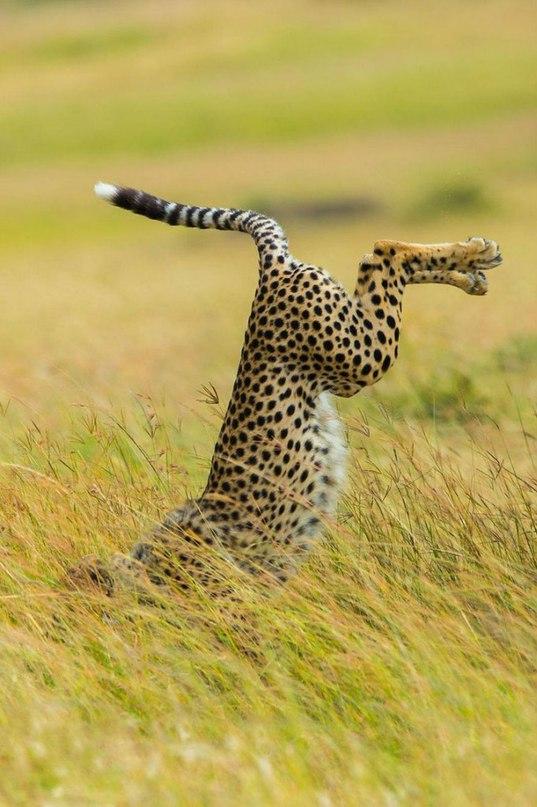 PoSgUV0nAQo - Смешные животные Wildlife Photography Awards 2015