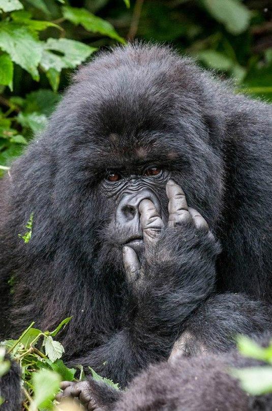 gbcORTBeXPo - Смешные животные Wildlife Photography Awards 2015