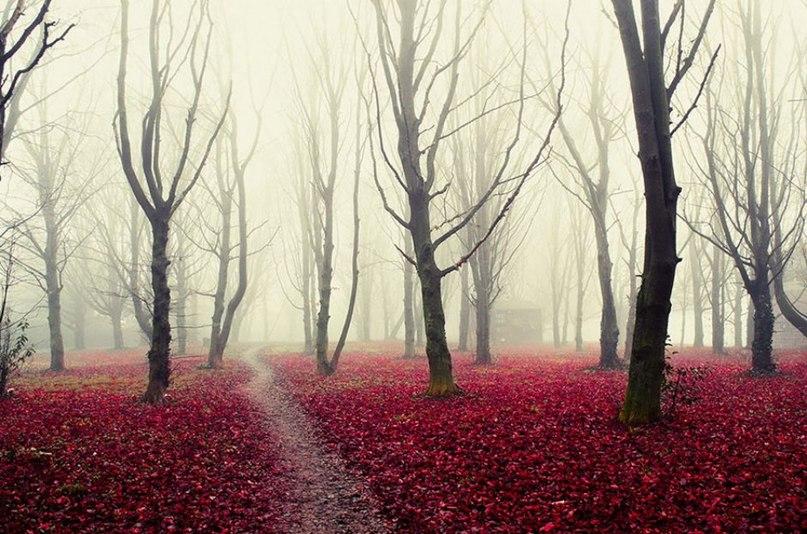 BKWacGQpKSk - 15 волшебных лесов, в которых хочется заблудиться