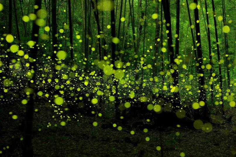 fiecgE3MChE - 15 волшебных лесов, в которых хочется заблудиться