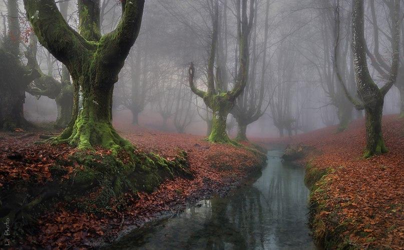 nk H5CkoegI - 15 волшебных лесов, в которых хочется заблудиться