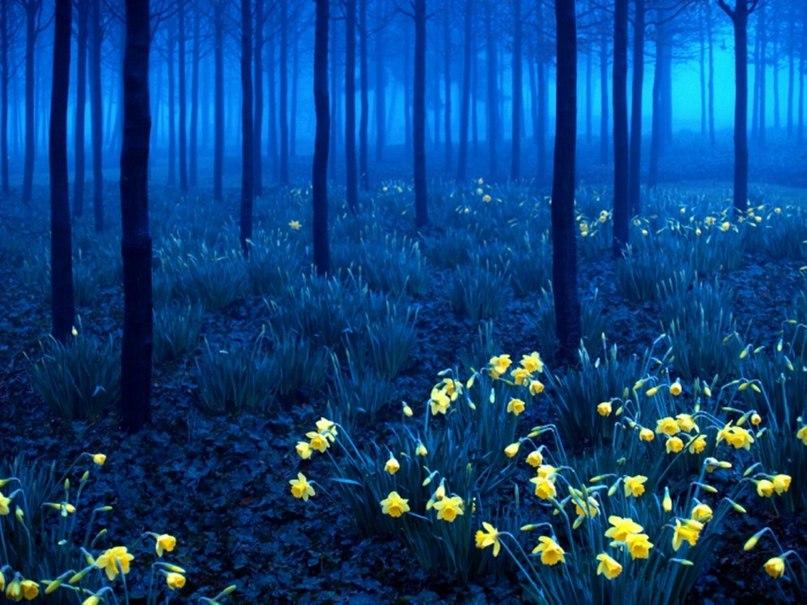 4RHj3UzmbPU - 15 волшебных лесов, в которых хочется заблудиться