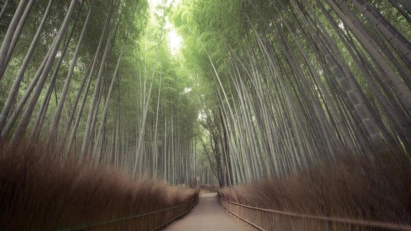fUrXmhLAGeA - 15 волшебных лесов, в которых хочется заблудиться