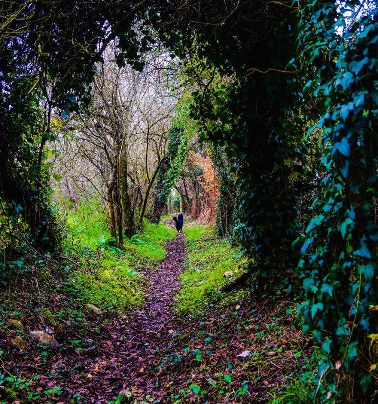 lCH wsn5KJM - 15 волшебных лесов, в которых хочется заблудиться