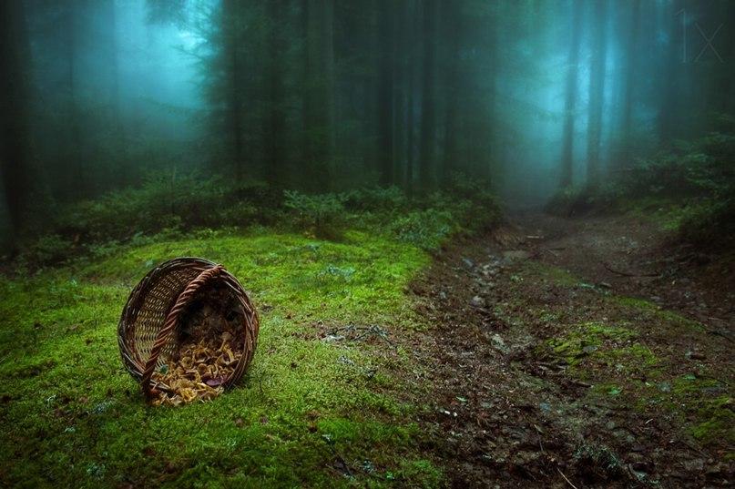 chEaQ9gsKbk - 15 волшебных лесов, в которых хочется заблудиться