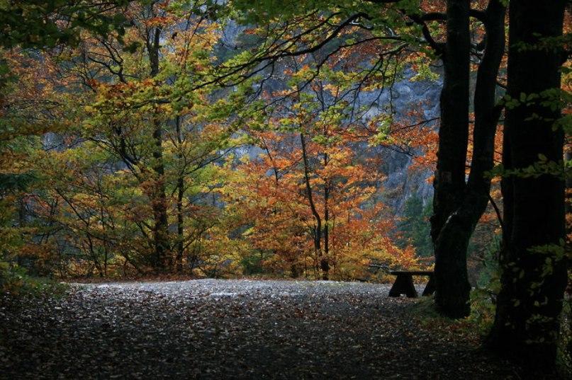OTrqUQxyrD0 - 15 волшебных лесов, в которых хочется заблудиться