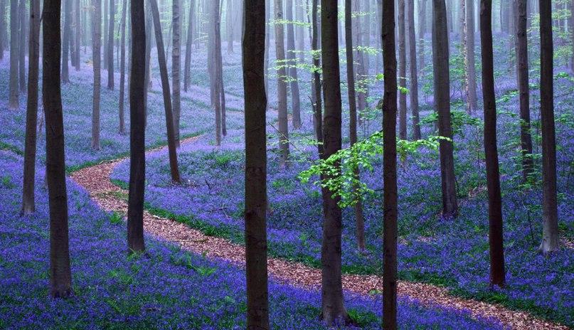 wlPc00Hlm3I - 15 волшебных лесов, в которых хочется заблудиться