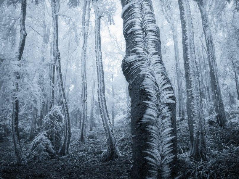 wttCbNVg88w - 15 волшебных лесов, в которых хочется заблудиться