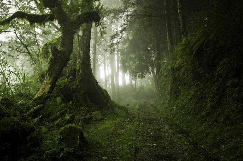 6O 5OJqjESY - 15 волшебных лесов, в которых хочется заблудиться