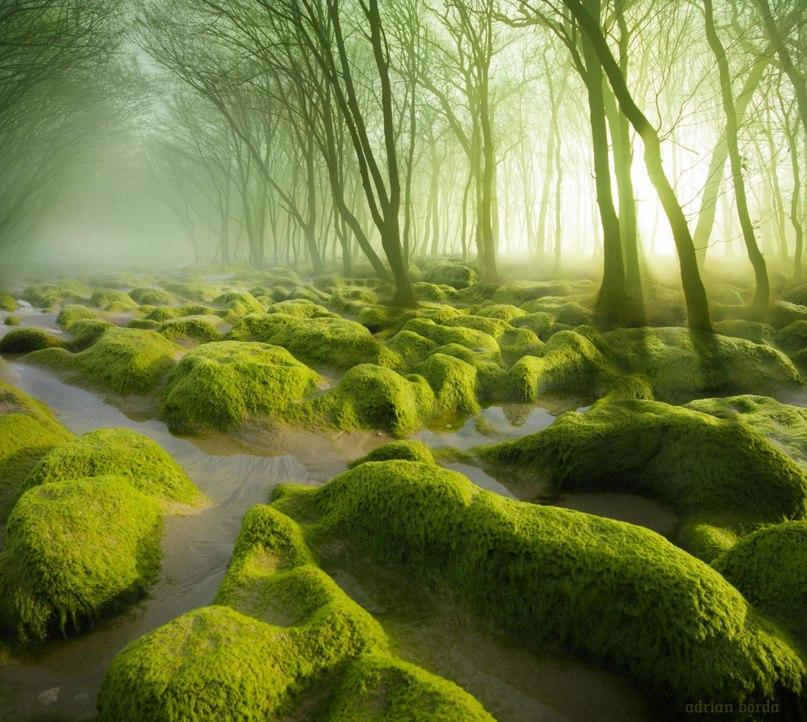 0cz5C7nxMg - 15 волшебных лесов, в которых хочется заблудиться