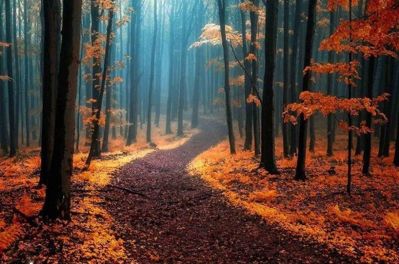 cMM0dZW9pAw - 15 волшебных лесов, в которых хочется заблудиться