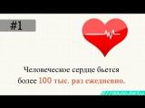 12 интересных фактов о сердце и его здоровой работе