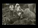 «Первозданная природа: Затерянный мир. Древние Тепуи Венесуэлы» (Документальный, животные)